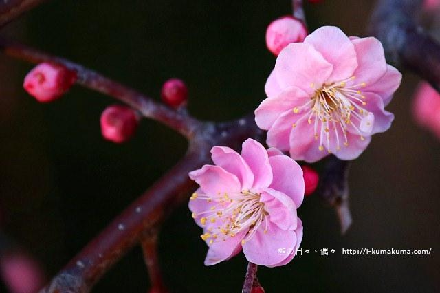 名花之里冬季彩燈-2861