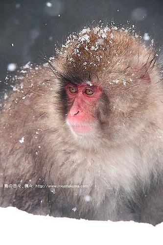 地獄谷野猿公苑-IMG_9684