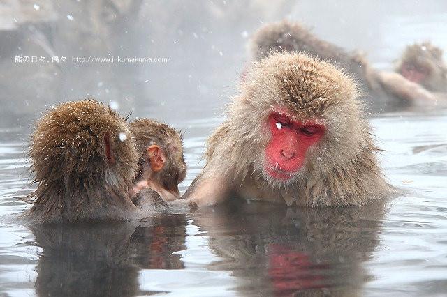 地獄谷野猿公苑-IMG_9760