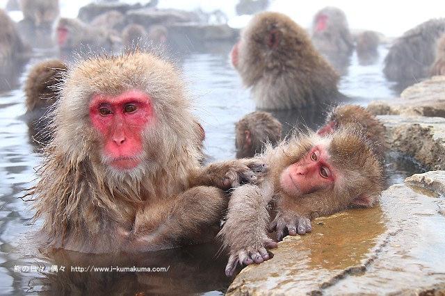 地獄谷野猿公苑-IMG_9904