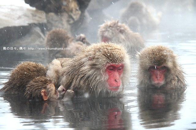 地獄谷野猿公苑-IMG_9779