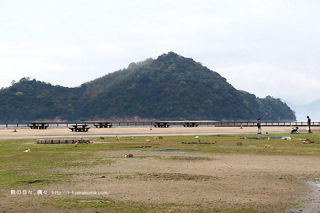 廣島大久野島(兔島)-K24A0989