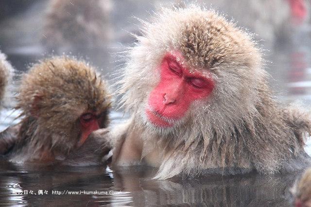 地獄谷野猿公苑-IMG_9963