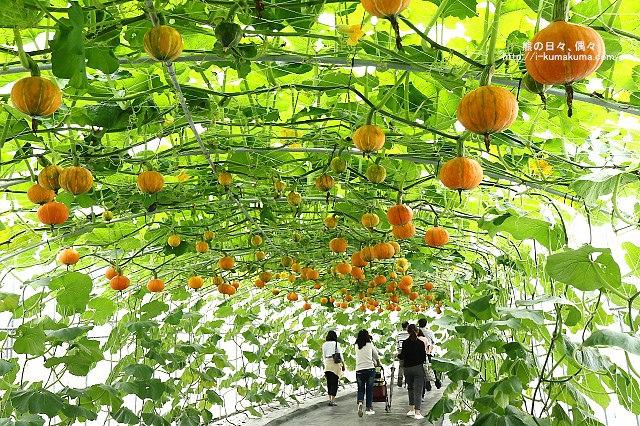 2016屏東熱帶農業博覽會-K24A9413