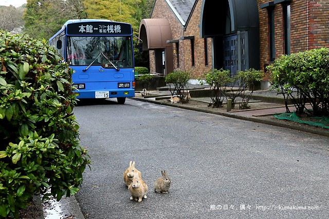 廣島大久野島(兔島)-K24A1392