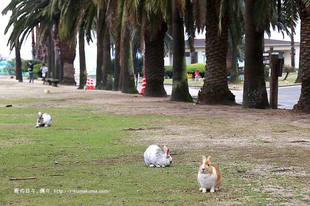 廣島大久野島(兔島)-K24A1201