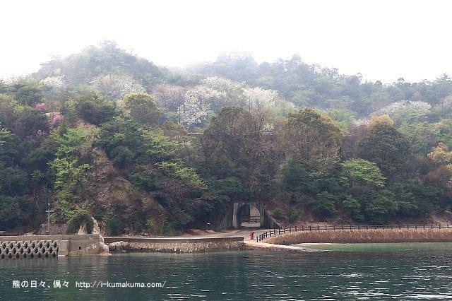 廣島大久野島(兔島)-K24A0523
