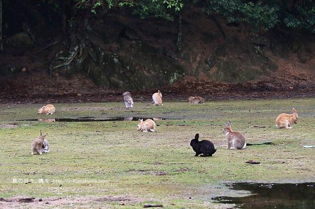 廣島大久野島(兔島)-K24A1208