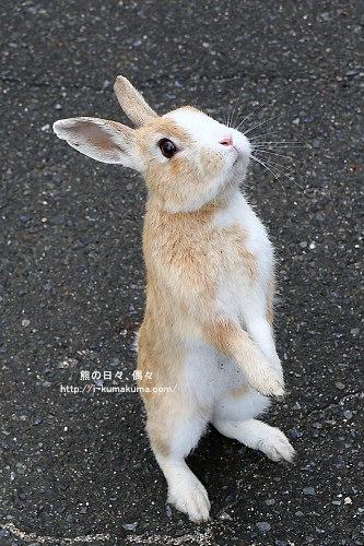 廣島大久野島(兔島)-K24A1334
