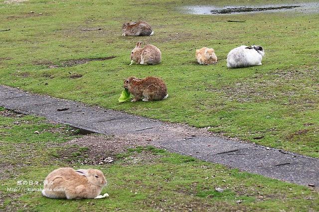 廣島大久野島(兔島)-K24A0835