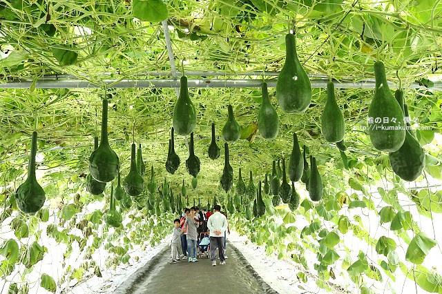 2016屏東熱帶農業博覽會-K24A9346