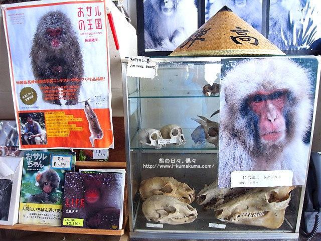 地獄谷野猿公苑-R0033306