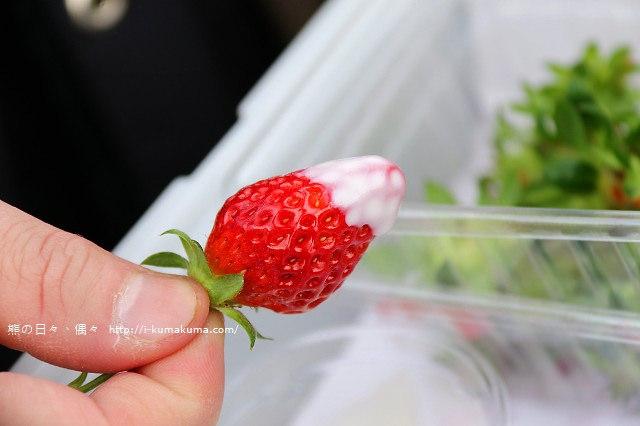 市野園芸採草莓-9679