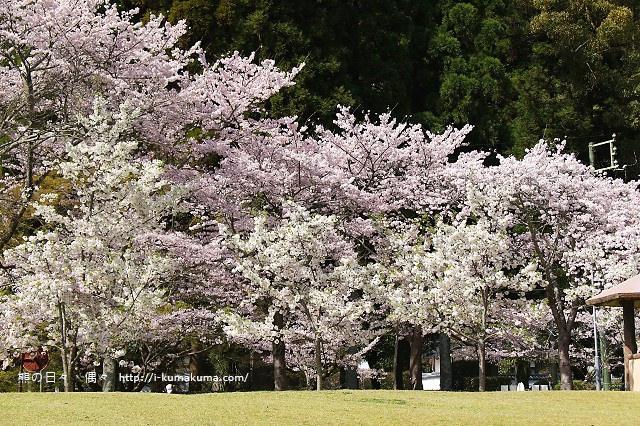 吉香公園-3548