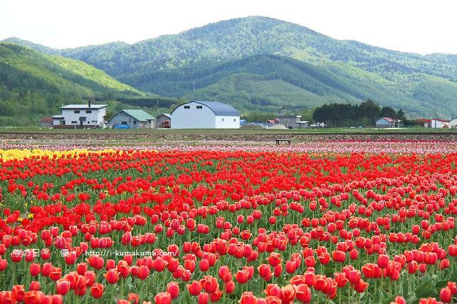 北海道自由行-5138