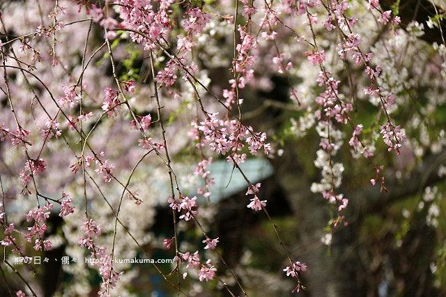 吉香公園-3681