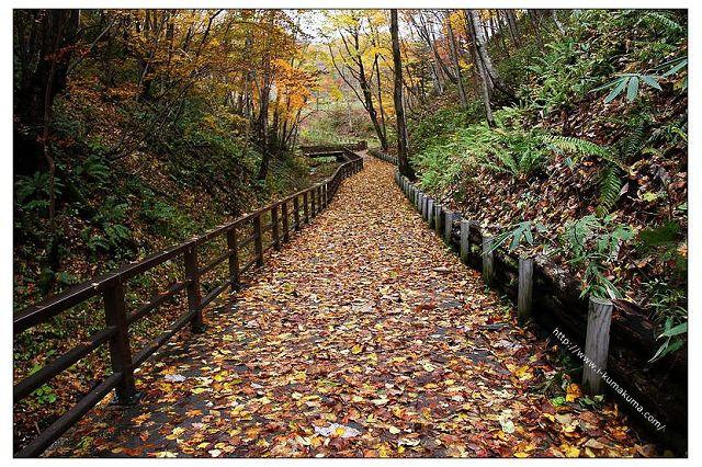 國營瀧野鈴蘭丘陵公園-1251