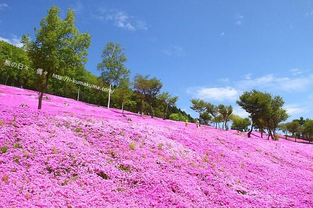 北海道自由行-4915