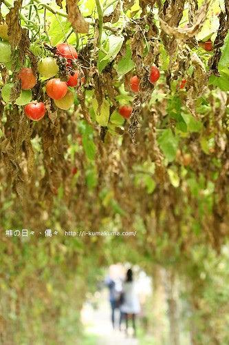大花農場-9103