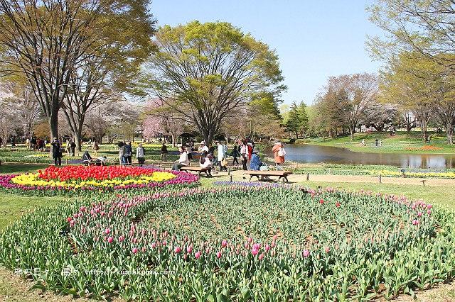 國營昭和紀念公園櫻花-7118