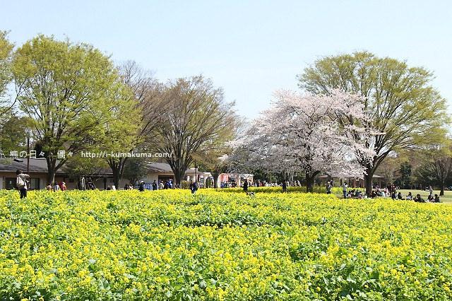 國營昭和紀念公園櫻花-6735