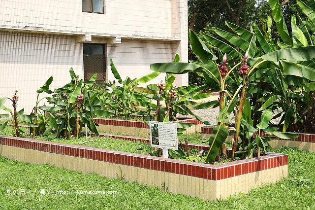 台灣香蕉科技園-0608