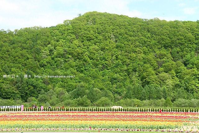 上湧別鬱金香公園--5303