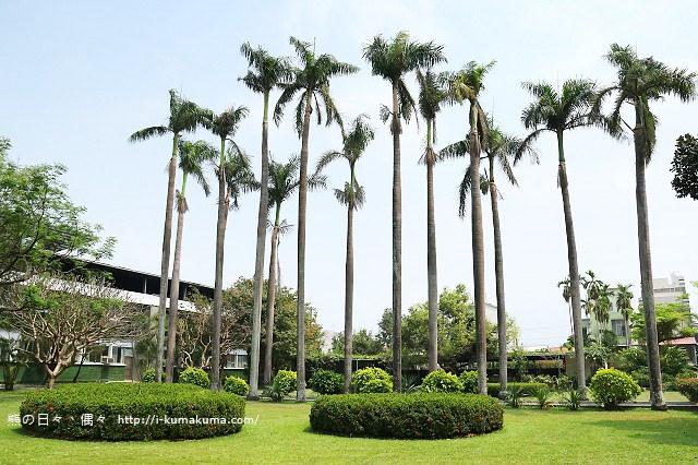 台灣香蕉科技園-0412