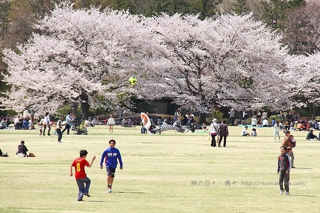 國營昭和紀念公園櫻花-6575