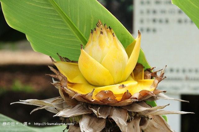 台灣香蕉科技園-0597