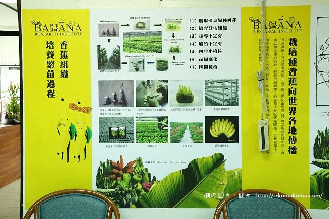 台灣香蕉科技園-0516
