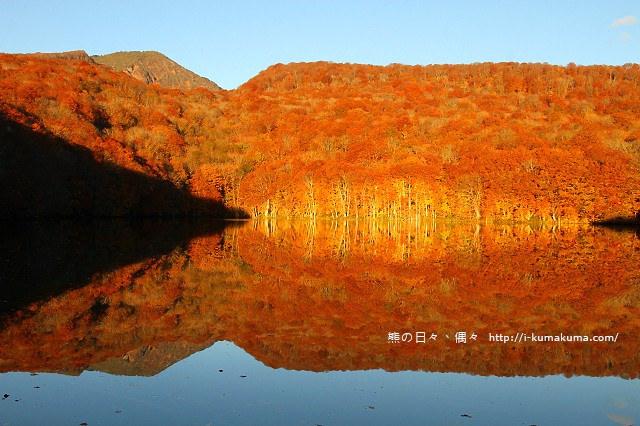 青森蔦沼紅葉-7176