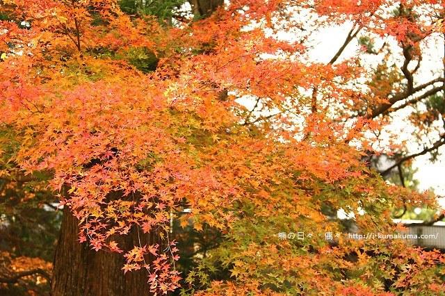 箱根長安寺-A1689