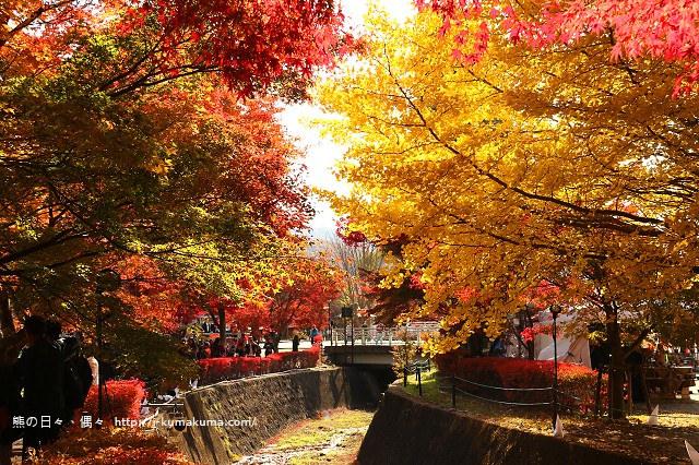 河口湖紅葉迴廊紅葉-K24A1202