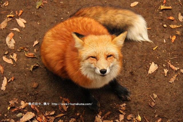 藏王狐狸村-IMG_0302