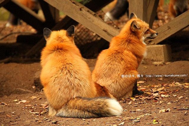 藏王狐狸村-IMG_0586