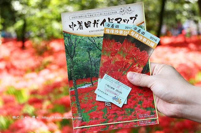 埼玉巾著田曼珠沙華公園(彼岸花)-K24A6358