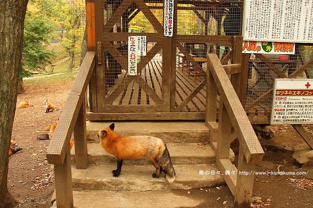 藏王狐狸村-IMG_0608