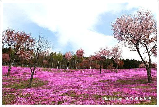 瀧上芝櫻公園-03