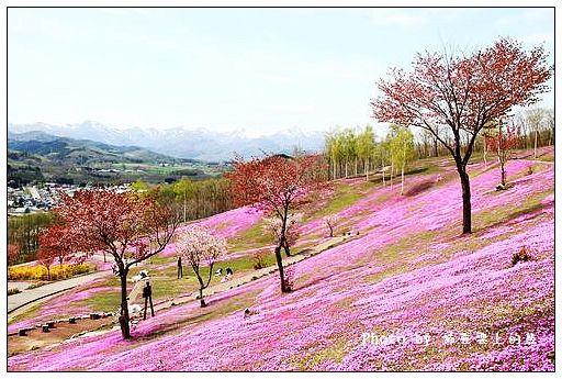 瀧上芝櫻公園-39