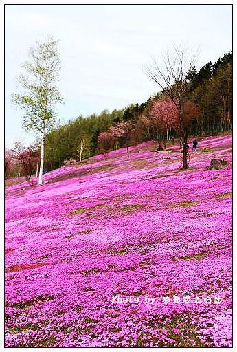 瀧上芝櫻公園-16