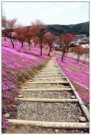 瀧上芝櫻公園-36
