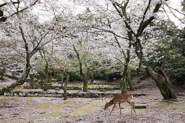 廣島嚴島神社-K24A4887