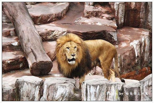 丹山動物園-02