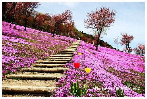 瀧上芝櫻公園-44