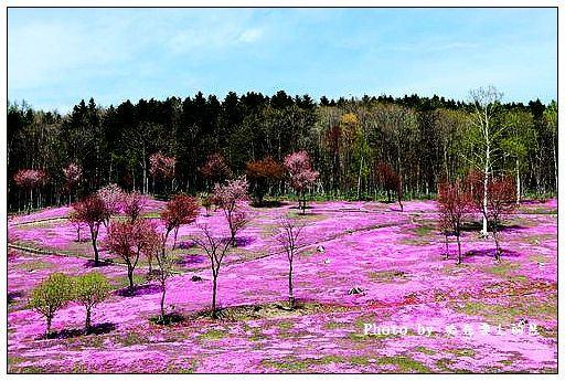 瀧上芝櫻公園-57