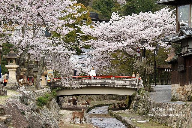 廣島嚴島神社-K24A4952