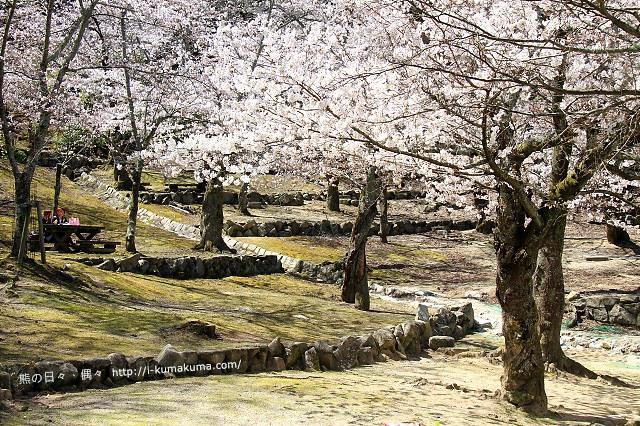 廣島嚴島神社-IMG_7145