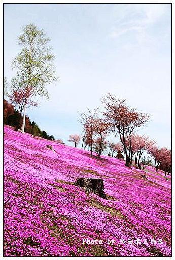 瀧上芝櫻公園-41