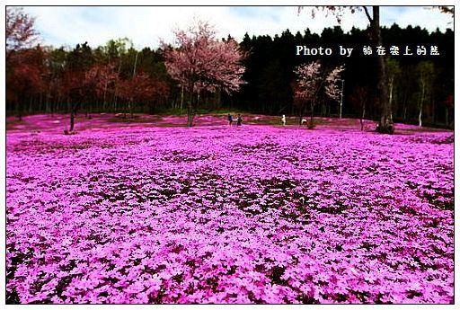 瀧上芝櫻公園-13